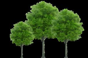 tree-2515748_640s